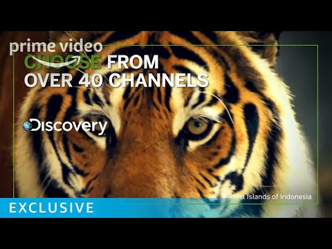 Welcome to amazon channels | prime video