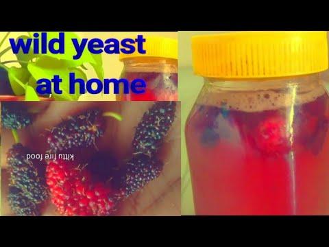 Wild yeast making home/natural yeast making/home made yeast/wild yeast making at home.